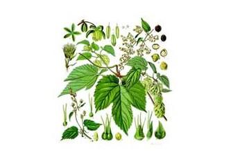 Menopozda bitkilerle tedavi