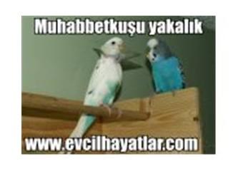 Muhabbetkuşu ve Papağan'lara yakalık ve boyunluk yapımı ve faydaları
