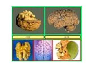 Beyin, ceviz ve gümüş iyonu