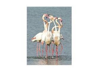 Öykü yarışması: Arkadaşım Flamingo