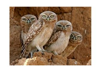Çatıları kukumav kuşlarınca beklenen kızlar