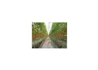 Toprak ve bitkide gereksiz gübreleme ve ilaçlama