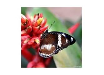 Yasaklı Minik Kelebek