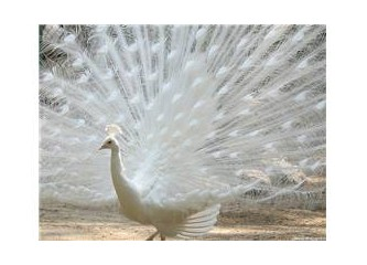 Allah sonsuz güzellikleri sanatının içinde yaratandır