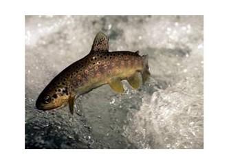 Bulanık suda balık avlamak!