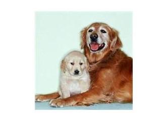Köpeklerin Frekansı Farklıdır