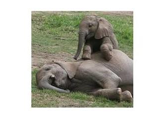 Anne filin sakat yavrusuna bağlılığı – Video