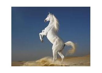 Eşeğin çalıştığı at içindir!