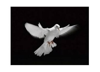 Ak Güvercinim, Pek Özgür Yiğidim!