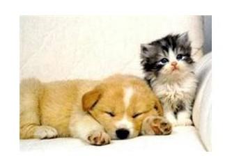 Romatizmalı Kedi ve Köpeklere Fizyoterapi
