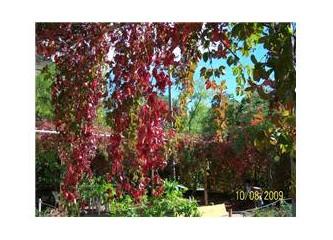 Güz mevsiminin tüm kızıl ve canlı renkleri düştü Muğla'ya, sanatta Gabriele Gabriel'in resimleri