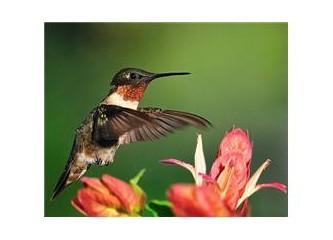 Bir bilim adamı kuşlardaki mükemmel uçuş tekniğini anlatıyor