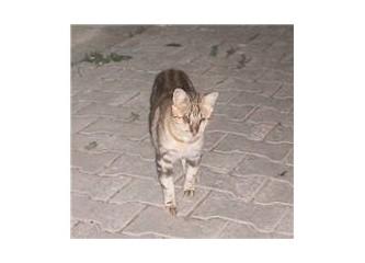 Kör kedi, topal kedi