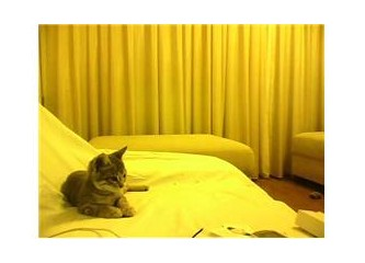 Kedi hikayeleri -1
