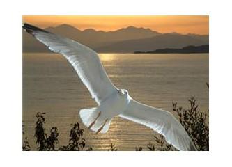 Bir Kuşun Kanadındadır Mavilikler