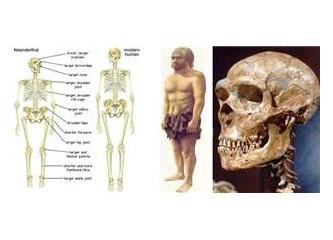 Evrim yaratılış mı?