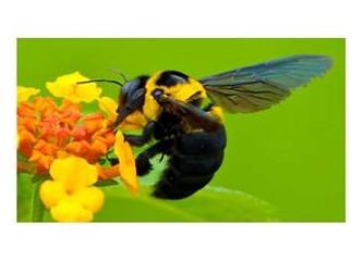 Arıların muhteşem bir dansı!