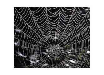 Örümceklerin tavanda yürüyebilmelerinin sırrı