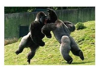 Pazar Neşesi (İki Goril)