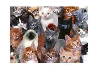 Kedilerde şaşırdı