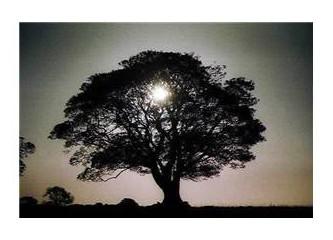 Aşı tutmayan ağaç gibiyim