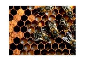 Arılar yeryüzünden kaybolursa kaç yıl ömrümüz kalır?