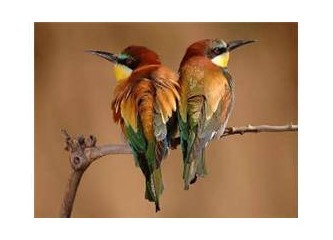 Değişen şartlara göre şekil alan kuş kanadı