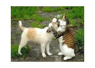 """Kediler, yetkililere sesleniyor: """"Geçim sıkıntısı yaşıyoruz"""""""