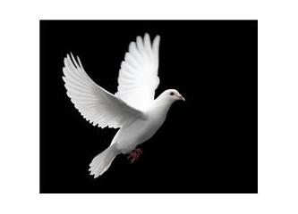 Beyaz güvercinim!