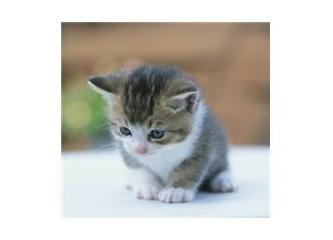İyi kalpli küçük kedi