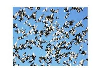 İstanbul ve güvercinler