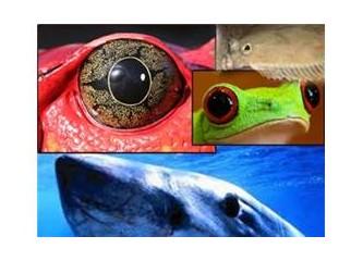 Balık gözlerindeki muhteşem sanat