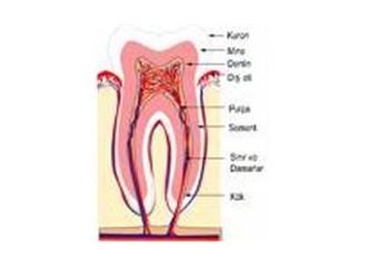 Mersin'de Güçlü Dişler Projesi hayata geçirilecek...