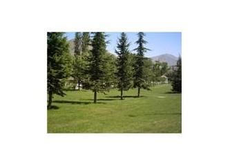 Çam ağacı ve faydaları