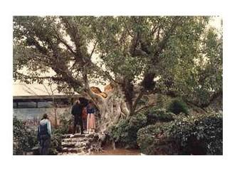Gargat Ağacı nedir bilir misiniz?