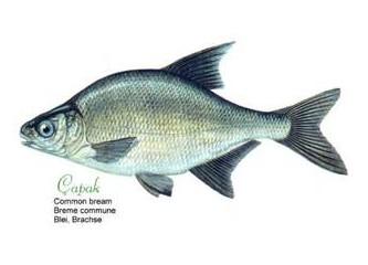 Tatlı su balıkları