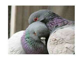 Sevgi gölgeniz olsun