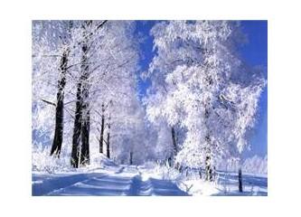 Aylar 12 :  Aralık