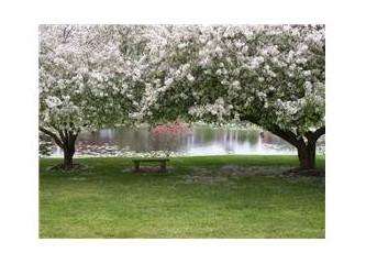 Bahar sevdası