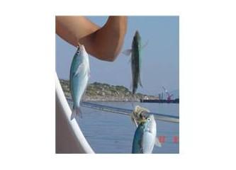 İzmarit Balığı Hakkında
