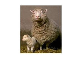 Bir Kuran Mucizesi: Canlıların kopyalanması