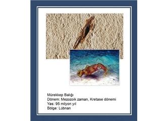 95 milyon yıllık mürekkep balığı fosili evrimi çürütüyor