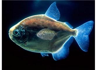 Balıklar sizden özür dilerim !