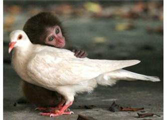 Sevgi şart!
