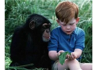Evrimi çökerten deliller 5 – Maymun ve İnsan genomunun %99 benzeştiği iddiasının geçersizliği