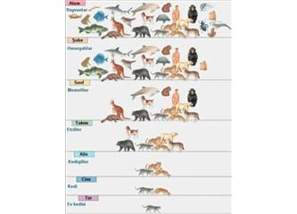 Canlıların sınıflandırılması (taksonomi)