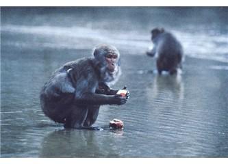 Yüzüncü Maymun'un hikâyesi
