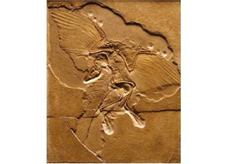 Evrimi çökerten deliller 7 - Archæopteryx yanılgısı