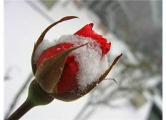 Kar altındaki çiçekler