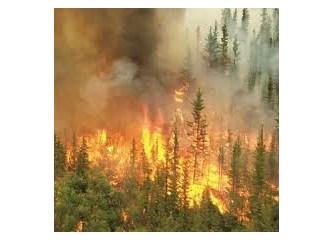 Orman ve yangın